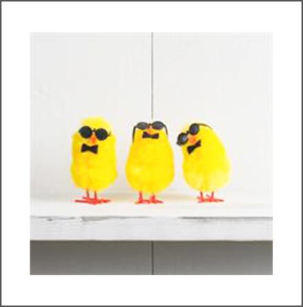 Kyckling med solglasögon, 3-pack